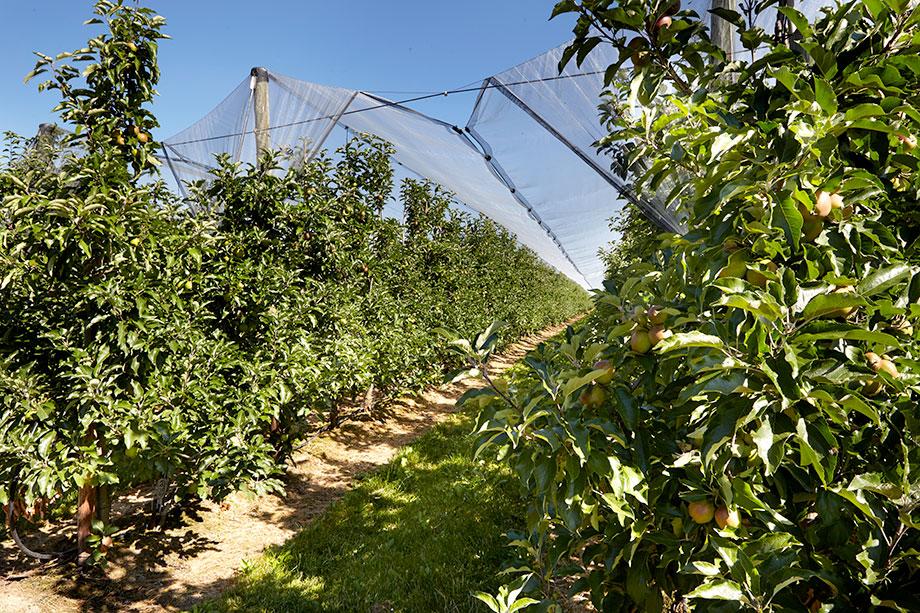 Ideale Bedingungen für den Obstanbau
