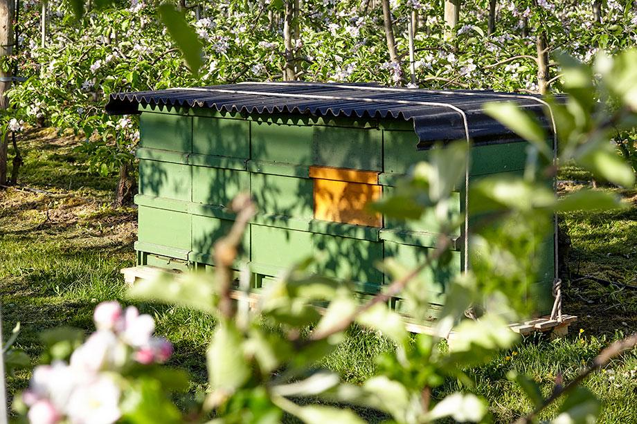Bienen im Obstanbau Bienenstock