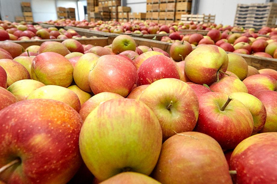 Lagerung unserer Äpfel – energiesparen für unsere Umwelt