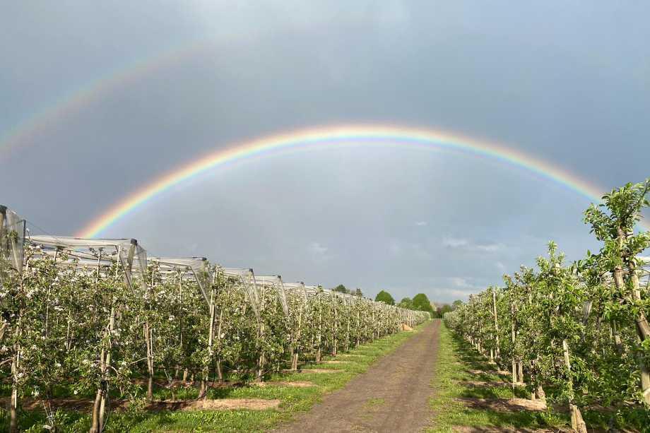 Regenbogen über dem Zedernhof